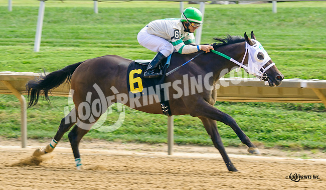 Church Monkey winning at Delaware Park on 9/2/16