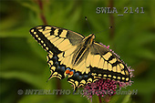 Carl, ANIMALS, wildlife, photos(SWLA2141,#A#)