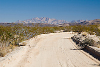 Back road in Joshua Tree National Park