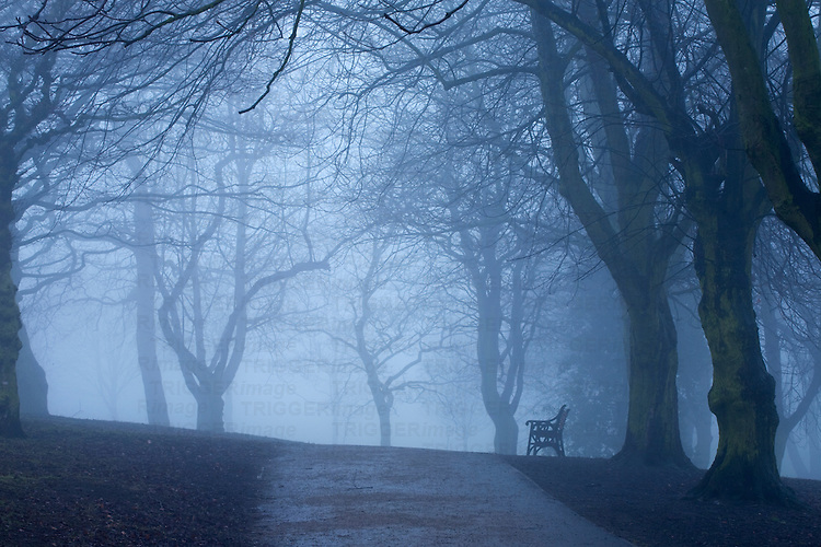 A lone park bench on a foggy day in the park