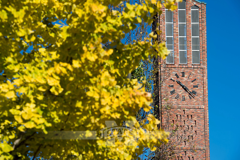 Fall leaves (gingko tree): Chapel of Memories.<br />  (photo by Megan Bean / &copy; Mississippi State University)