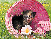 Marek, ANIMALS, REALISTISCHE TIERE, ANIMALES REALISTICOS, cats, photos+++++,PLMP2584,#a#