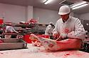 29/09/05 - BOURBON L ARCHAMBAULT - ALLIER - FRANCE - SICABA. Societe d Interet Collectif Agricole de Bourbon l Archambault. Abattage, decoupe, conditionnement et commercialisation de viande de bovin, d ovin et de porc. Decoupe de viande d agneaux - Photo Jerome CHABANNE