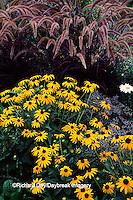 63821-03319 Black-eyed Susans & Purple Fountain grass    IL