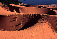 Freewheeling four-wheelers and dirt bikes ride over the Coral Pink Sand Dunes of southwestern Utah. Part state park, part BLM wilderness-quality land, the dunes are both playground and battleground. ATVers fight for wide-open access; environmentalists for rare plant and animal species.