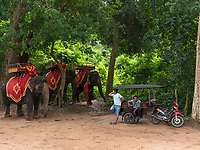 Elephants and Tuk Tuks old and new transportation at the Bayon Temple Area, Cambodia