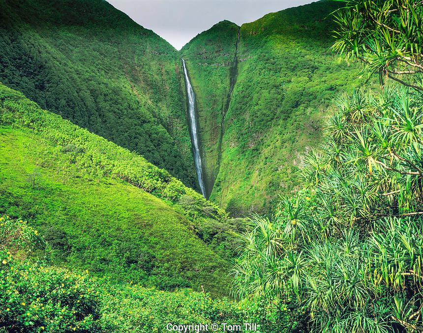 1200 foot Papalaua Falls, Papalaua Valley, Island of Molokai, Hawaii  World's highest sea cliffs  One of the World's higjest waterfalls