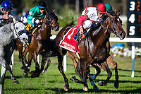 OLDSMAR, FLORIDA - FEBRUARY 11: Inspector Lynley #1, ridden by John R. Velazquez (red hat), wins the Tampa Bay Stakes at Tampa Bay Downs on February 11, 2017 in Oldsmar, Florida (photo by Douglas DeFelice/Eclipse Sportswire/Getty Images)