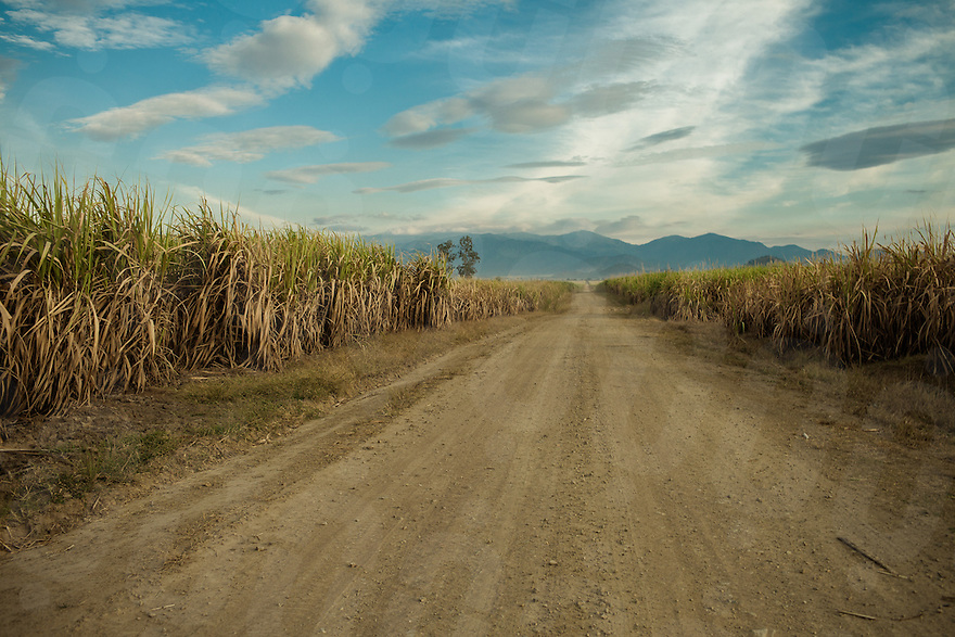 View of the sugar cane plantation of Omlaing that covers more than 19.000 hectares. Omlaing commune, Kompong Speu Province - Cambodia. 09 Jan 2013 © Thomas Cristofoletti / Ruom