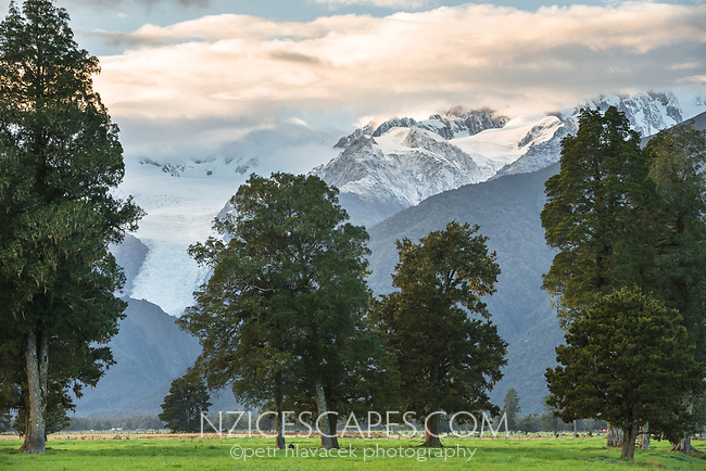 Sunrise over Aoraki Mt. Cook and Mt. Tasman of Southern Alps and Fox Glacier farmland, Westland Tai Poutini National Park, West Coast, UNESCO World Heritage Area, South Westland, New Zealand, NZ