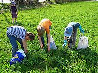 Kinder ernten Kräuter, Kräuter im Frühjahr sammeln für Kräutersuppe und Wildgemüse-Salat