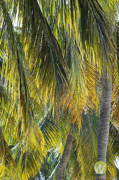 Westin Resort and Villas, St. John, Virgin Islands. Palm leaf design.