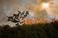 Burning of sugarcane plantation for manual cutting, Bauru city region, Sao Paulo State, Brazil.