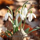 Gisela, FLOWERS, BLUMEN, FLORES, photos+++++,DTGK2064,#f#