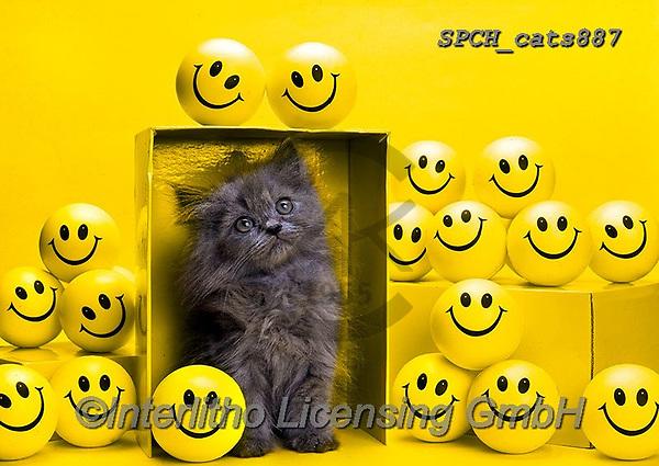 Xavier, ANIMALS, REALISTISCHE TIERE, ANIMALES REALISTICOS, cats, photos+++++,SPCHCATS887,#a#, EVERYDAY