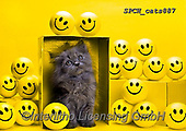Xavier, ANIMALS, REALISTISCHE TIERE, ANIMALES REALISTICOS, cats, photos+++++,SPCHCATS887,#a#, EVERYDAY