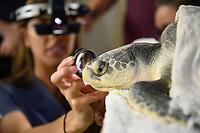 IMMS Turtle Visit
