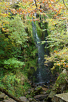 The waterfall, Mallyan Spout, near Goathland, the North Yorkshire Moors, England, shrouded in early autumn leaves.
