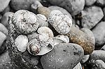 Rocks and shells at Grass Point, Bruny Island, Tasmania, Australia