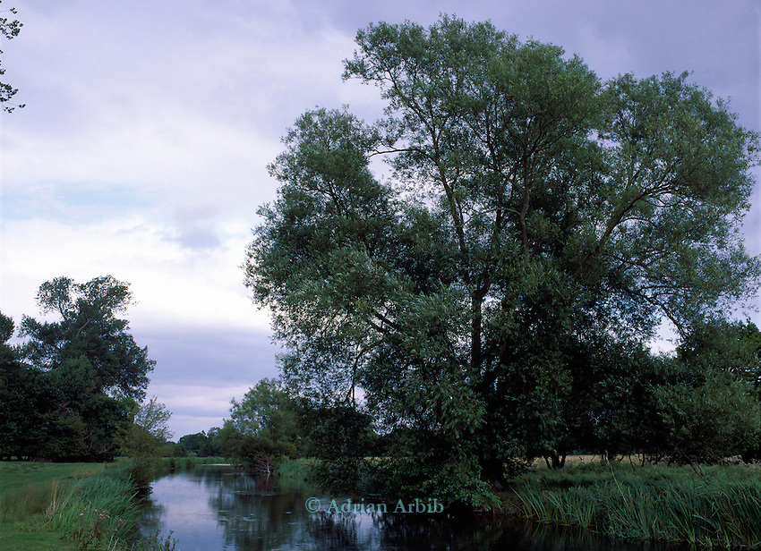 The river  Kennet . The route of the Newbury  bypass passed through these watermeadows.