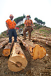 Nature Conservancy, Washington Chapter, Ellsworth Creek Preserve, forest thinning, timber cut for blowdown prevention, Michael Innis, log loader, (left), Jeff Rippet, faller, Rippet Timber Cutting, Emerald Edge Project, Willapa Bay, Pacific County, Washington Coast, Washington State, Pacific Northwest, United States,