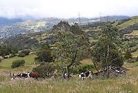 OCETA PARAMO -BOYACA-COLOMBIA, 15-01-2017: Oceta es el páramo más bonito del mundo, situado cerca del municipio de Mongui Boyaca. Se encuentra a 4000 metros sobre el nivel del mar, y su clima cae a 0 ° c por la noche, con una temperatura máxima de 17 ° c durante el día. Dentro de la flora típica están los frailejones de plata, el amarillo y el blanco, los senecios amarillos, el lupinus púrpura, y gran cantidad de musgo y liquen atados a las roca / Oceta is the most beautiful moorland in the world, placed near the municipality of Mongui Boyaca. It is located at 4000 meters above sea level, and its climate drops to 0°c at night, with maximum temperature is 17°c during the day. Within the typical flora are the silver frailejones, the yellow and the white, the yellow senecios, purple lupinus, and great amount of moss and lichen attached to the rocks. Photos:VizzorImage / César Melgarejo / Cont