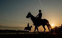 ELMONT, NY - JUNE 08: Horses enter the track to exercise as horses prepare on Friday for the 150th running of the Belmont Stakes at Belmont Park on June 8, 2018 in Elmont, New York. (Photo by Sydney Serio/Eclipse Sportswire/Getty Images)