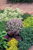 Texture in the herb garden. Thyme in bloom, golden oregano, gold thyme, patio plantings, with spanish lavender Lavendula