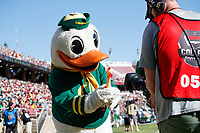 STANFORD, CA - SEPTEMBER 21: The Oregon Duck shows his toy chicken to the camera operator during a game between University of Oregon and Stanford Football at Stanford Stadium on September 21, 2019 in Stanford, California.