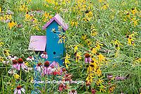 63821-207.01  Birdhouse in garden with Purple Coneflowers (Echinacea purpurea), Gray-headed Coneflowers (Ratibida pinnata) and Red Bee balm (Monarda didyma) Marion Co. IL