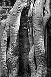 Ta Prohm Roots And Stone 04 - Silk-cotton tree roots on the NW side of Gopura III, Ta Prohm Temple, Angkor, Cambodia