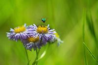 Macro-wildflowers-