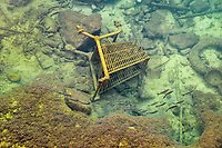 A small shoal of fish swims close to the sea floor in the shallow waters, that is littered with assorted rubbish including a shopping cart and plastic pipes, by the seafront of the city of Piraeus near Athens, Greece, Mediterranean Sea, Atlantic Ocean