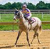 It's All Copacetic winning at Delaware Park on 8/22/16