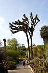 Cactus Garden at Huntington Gardens in Pasadena