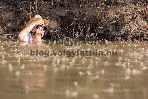 Photographer takes pictures during the yearly few days long swarming of the long-tailed mayfly (Palingenia longicauda) on the river Tisza in Tiszainoka (some 135 km south-east from Budapest), Hungary on June 23, 2013. ATTILA VOLGYI<br /> The long-tailed mayfly larves live 3 years under water level in the river banks then swarm out for a one day period of their life to die after mating.