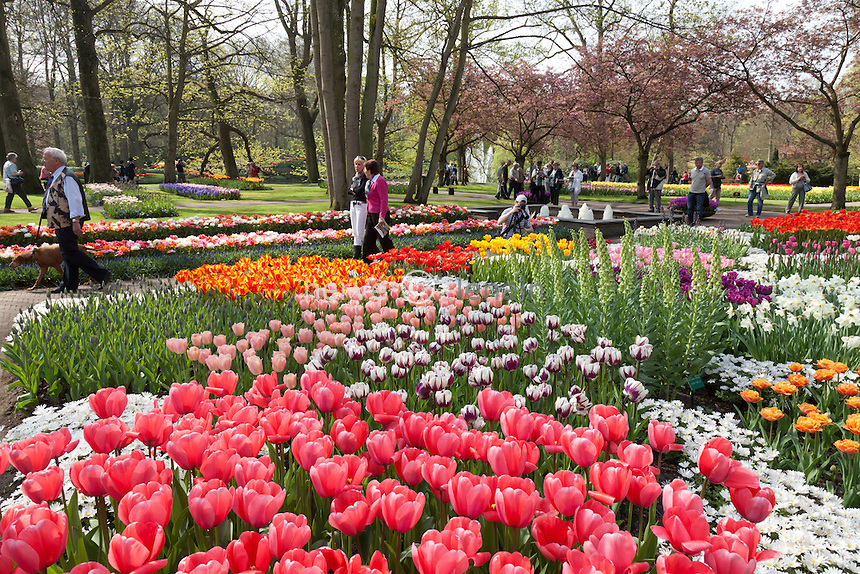 Hollande, région des champs de fleurs, Lisse, Keukenhof, massif avec tulipes, narcisses, anémone blanda, fritillaires de Perse // Hollande, région des champs de fleurs, Lisse, Keukenhof, flowerbed with tulips, daffodils, Anemone blanda ((Grecian Windflower), fritillaries and visitors.