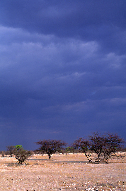 NAMIBIA, ETOSHA NATIONAL PARK, DARK RAIN CLOUDS