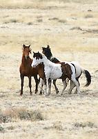 Horses - Wild - Spring