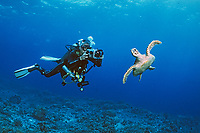 scuba diver photographying a swimming hawksbill turtle, Eretmochelys imbricata, with a Gates underwater video camera in Sulu Sea, Philippines, Pacific Ocean