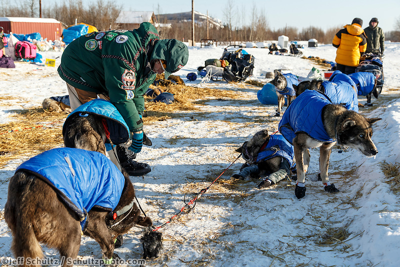 Volunteer vet Caroline Griffits examines dogs at the Koyukuk checkpoint on the afternoon of Sunday  March 15, 2015 during Iditarod 2015.  <br /> <br /> (C) Jeff Schultz/SchultzPhoto.com - ALL RIGHTS RESERVED<br />  DUPLICATION  PROHIBITED  WITHOUT  PERMISSION