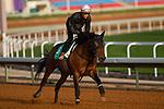 RIYADH,SAUDI ARABIA-FEB 27:  Chrisoberyl excercises for Saudi Cup at King Abdulaziz Racetrack on February 28,2020 in Riyadh,Saudi Arabia. Kaz Ishida/Eclipse Sportswire/CSM
