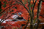 Roofs of Nanzen-ji Buddhist temple complex historic buildings behind red maple trees in a colorful autumn scenery, Sakyo-ku, Kyoto, Japan 2017 Image © MaximImages, License at https://www.maximimages.com