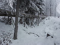FOREST_LOCATION_90162
