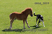 Bob, ANIMALS, REALISTISCHE TIERE, ANIMALES REALISTICOS, horses, photos+++++,GBLA3810,#a#, EVERYDAY