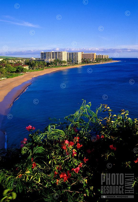 Kaanapali Beach, Hotels and Resorts with flowering red bougainvillea. Kaanapali was the first planned resort in the Hawaiian Islands. In the oreground is the famous Black Rock snorkeling area.
