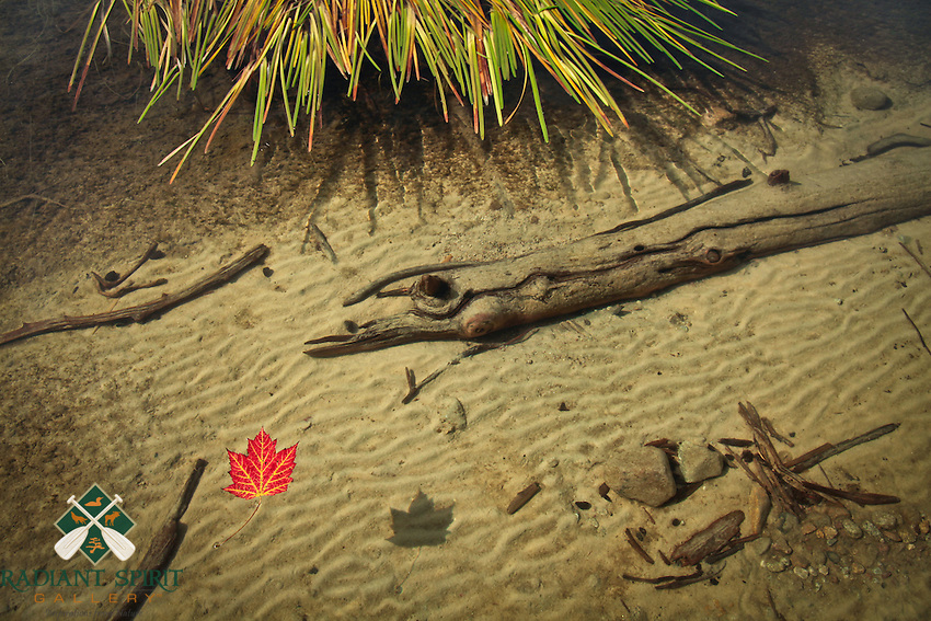 """""""Suspended""""<br /> <br /> A maple leaf floats on the  crystal clear waters of Sarah Lake in Quetico Provincial Park, Canada."""