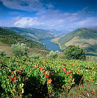 Portugal, Norte, bei Pinhão: Weinberge im Douro-Tal | Portugal, North, near Pinhão: Vineyards at Douro Valley