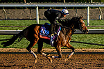 October 29, 2019 : Breeders' Cup Filly & Mare Turf entrant Sistercharlie, trained by Chad C. Brown, exercises in preparation for the Breeders' Cup World Championships at Santa Anita Park in Arcadia, California on October 29, 2019. Scott Serio/Eclipse Sportswire/Breeders' Cup/CSM