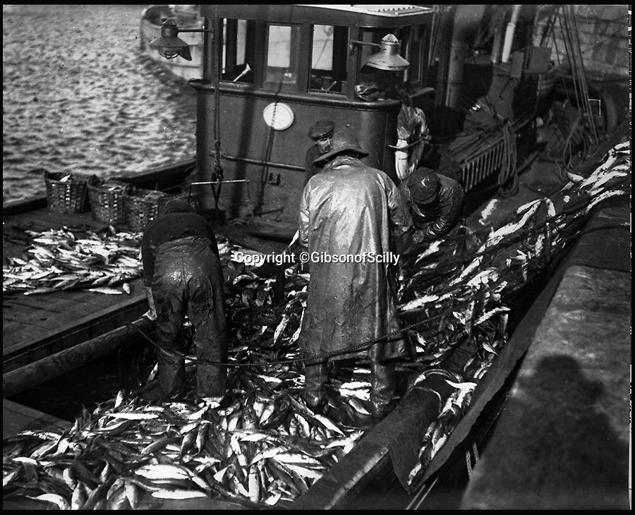 BNPS.co.uk (01202 558833)<br /> Pic: GibsonOfScilly/BNPS<br /> <br /> Large mackerel catch...<br /> <br /> An archive of eye-opening photographs documenting the grim reality of Poldark's Cornwall has emerged for sale for £25,000.<br /> <br /> More than 1,500 black and white images show the gritty lives lived by poverty-stricken families in late 19th and early 20th century Cornwall - around the same time that Winston Graham's famous Poldark novels were set.<br /> <br /> The collection reveals the lowly beginnings of towns like Rock, Fowey, Newquay and St Ives long before they became picture-postcard tourist hotspots.<br /> <br /> Images show young filth-covered children playing barefoot in squalid streets, impoverished families standing around outside the local tax office, and weather-beaten fishwives tending to the day's catch.<br /> <br /> The Cornish archive, comprising 1,200 original photographic prints and 300 glass negative plates, is tipped to fetch £25,000 when it goes under the hammer as one lot at Penzance Auction House.